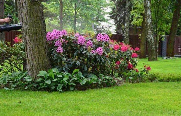 Ogród zróżowymi kwiatami